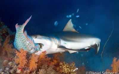 Szudán víz alatt