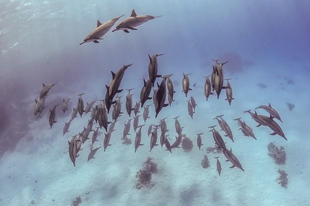Delfinek Egyiptomban