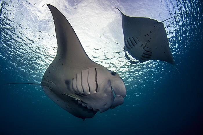 Palau Szigetek búvárkodás